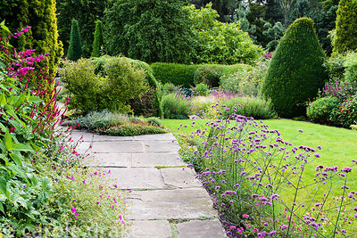 Front garden with a line of Verbena bonariensis between paving and lawn at York Gate Garden, Adel in July