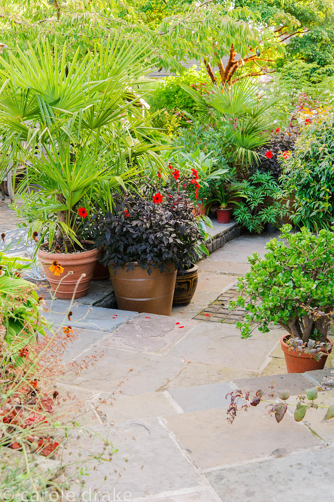 Terrace behind the house is framed by lush, colourful planting including palms, Dahlia 'Mystic Enchantment' and house plant C...