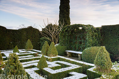 A knot garden of clipped box with variegated box pyramids and an ivy covered arbour in January at Bourton House garden in the...