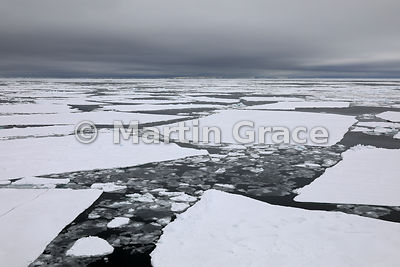 Sea ice at Latitude S63°53', Longitude W56°18', Weddell Sea, Antarctic Peninsula,  Antarctica
