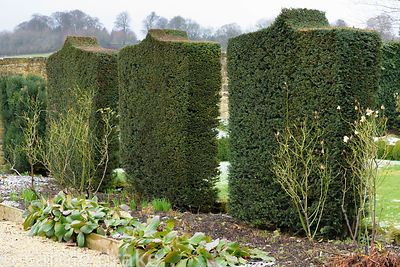 Clipped yews dividing the White Garden at Bourton House in the Cotswolds in January