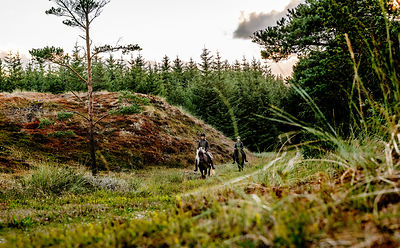 Danish women riding horses in Thy woods, Denmark 10