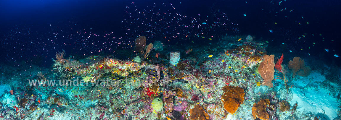 Mésophotic Reef