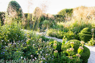 Clpped box and Stipa gigantea punctuate beds planted with herbaceous perennials including Phlomis russeliana, Pimpinella majo...