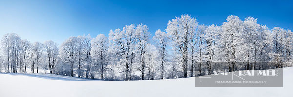 Winter landscape with hoar frost - Europe, Germany, Bavaria, Upper Bavaria, Miesbach, Kleinpienzenau - digital