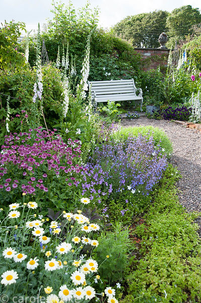 Border planted with Astrantia maxima, nepeta, and white foxgloves with bench nearby. Mindrum, nr Cornhill on Tweed, Northumbe...