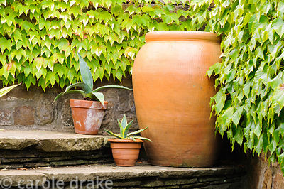 Small pots of succulents decorate steps to an upper level of the garden beside a large ceramic container.