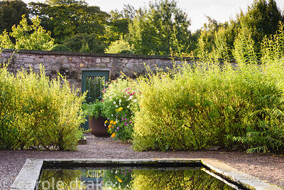 Formal pond in the Walled Garden surrounded by a willow hedge at Broadwoodside, Gifford, East Lothian in September
