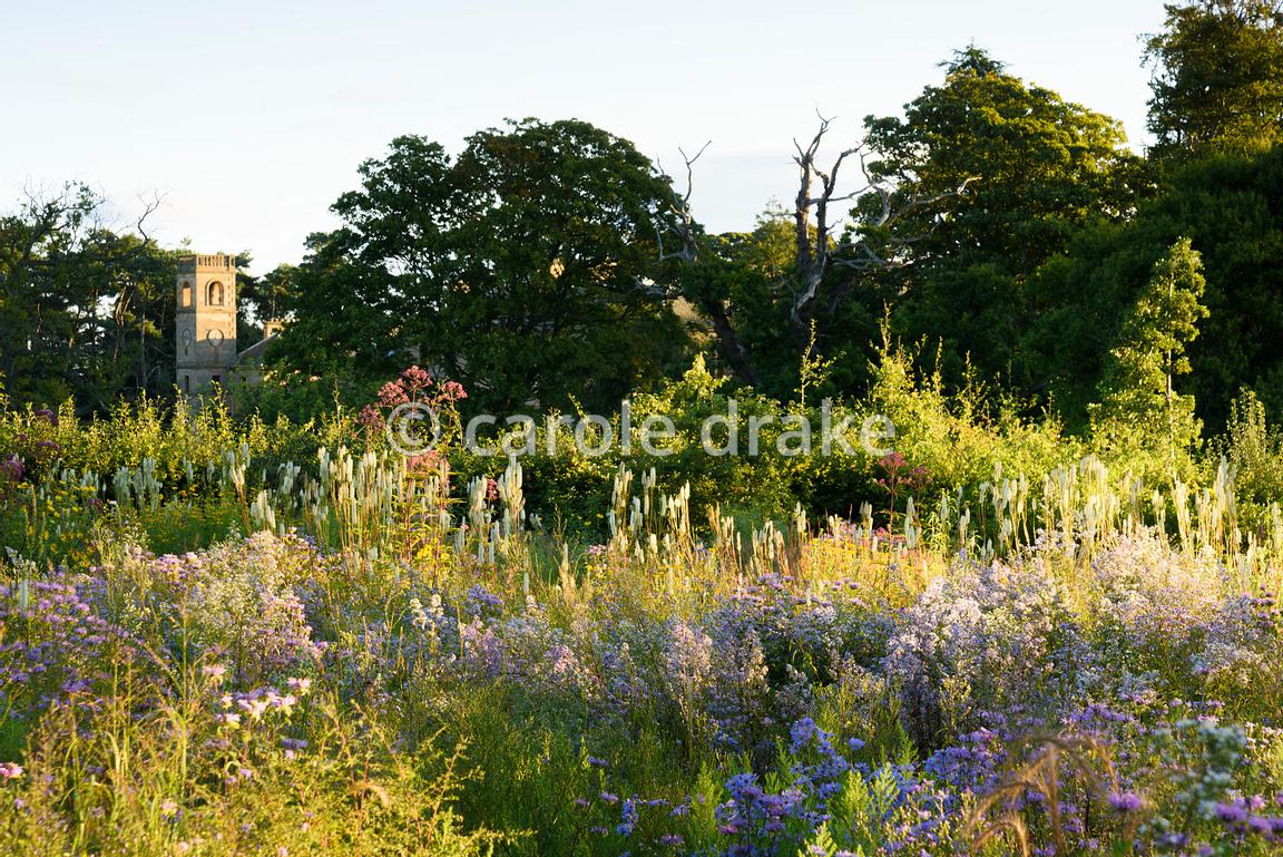 An area of prairie planting outside the walled garden, using species plants including Sanguisorba canadensis, Monarda fistulo...