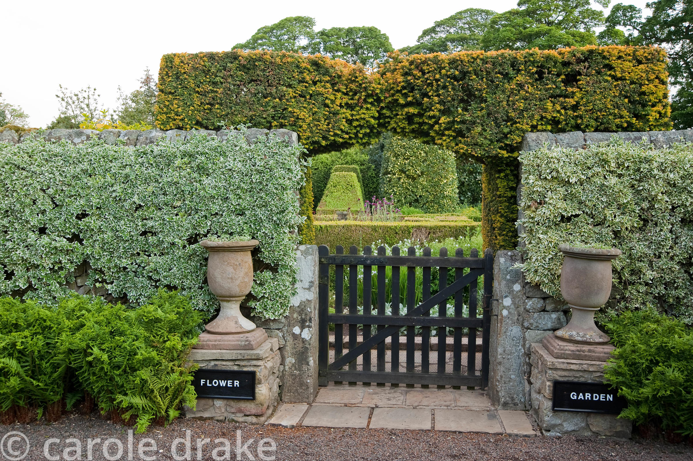 Gate into the Flower Garden is framed with a pair of urns, with clipped euonymus trained against the wall, and fern Dryopteri...