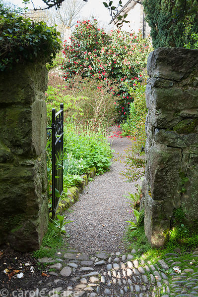 Gate in wall leading into the garden with cobbles in foreground and gravel path leading on toward a vivid red camellia. Plas ...