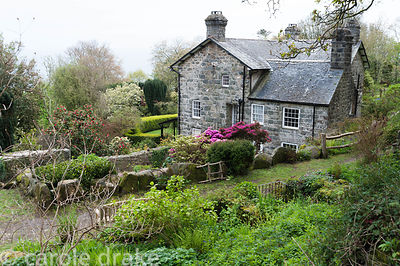 The house at Plas yn Rhiw framed with bright azaleas and the new leaves of box hedges and gunnera, viewed from the bank above...