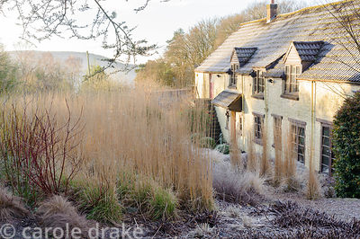 The upright forms of Calamagrostis x acutiflora 'Karl Foerster' and C. x acutiflora dominate the grass terrace during winter....
