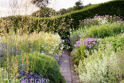 A path between beautifully planted borders featuring grasses such as Stipa gigantea and herbaceous perennials including Eryng...