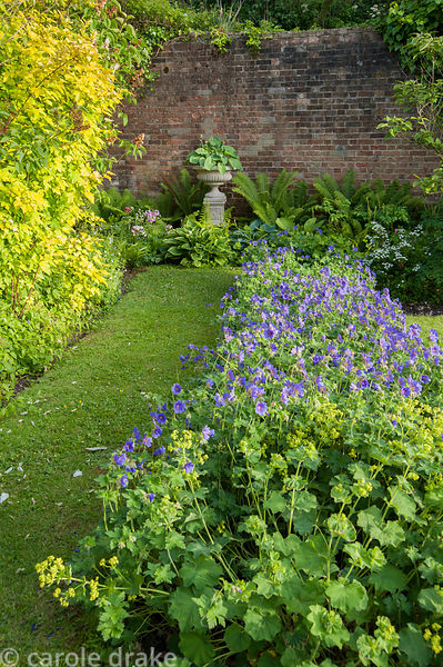 Hostas and ferns cluster around a decorative planter in a shady corner of the garden, with a bed of violet hardy geranium and...