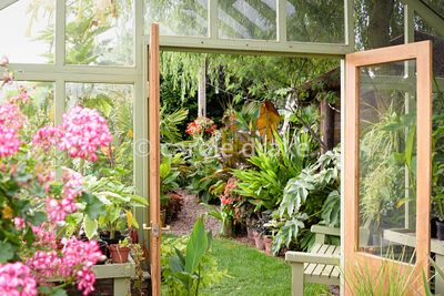 View from the bespoke greenhouse out to bold foliage plants including Tetrapanax papyrifer 'Rex', Ensete ventricosum 'Maureli...