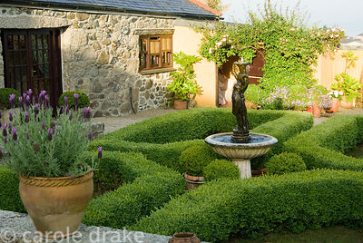 Box parterre with central water feature and pots of French lavender in foreground. Ednovean Farm, Marazion, Cornwall, UK