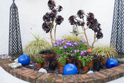Raised corner bed contains pots of succulents, foliage and flowering plants, with decorative blue glazed ceramic spheres and ...