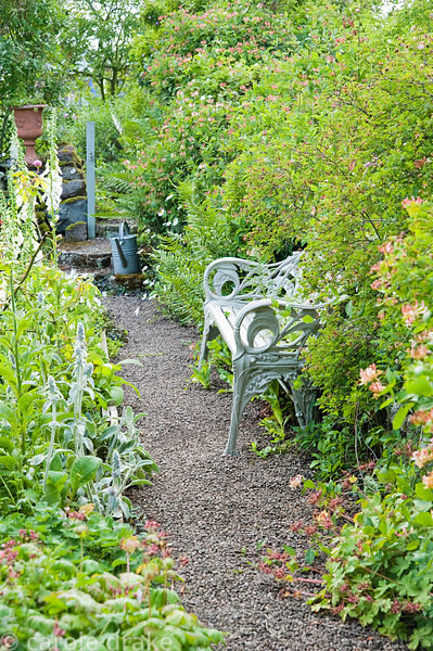 Wrought iron seat surrounded by honeysuckle, ferns and foxgloves. Mindrum, nr Cornhill on Tweed, Northumberland, UK