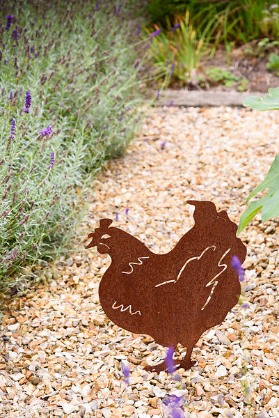 Cut out metal hen in a gravel garden with lavender in September