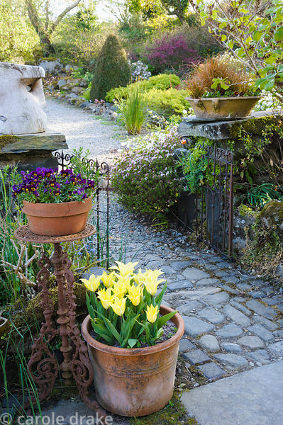 A cobbled path runs through the gate to the front garden framed with pots of tulips, violas and carex.