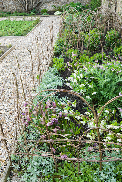 Woven hazel supports around a border in the walled kitchen garden containing hellebores. Melplash Court, Bridport, Dorset, UK