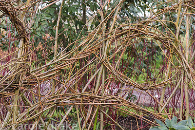 Woven willow screen in the winter garden at Ellicar Gardens, Notts