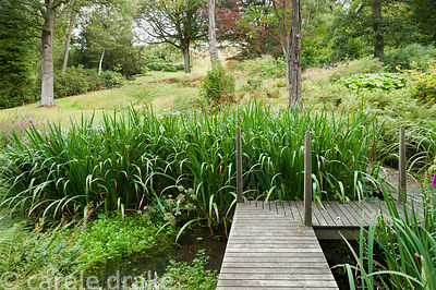 Boardwalk crossing the natural pond in the woodland garden. Perrycroft, Upper Colwall, Herefordshire, UK