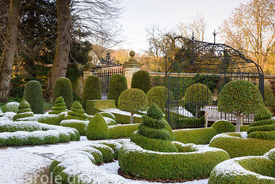 Parterre of clipped box dusted with snow in January at Bourton House in the Cotswolds, plus yew columns and mophead Prunus lu...