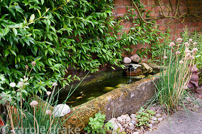 Stone trough drinking feature with frog water spout and Trachelospermum jasminoides in a garden in rural Nottinghamshire in S...