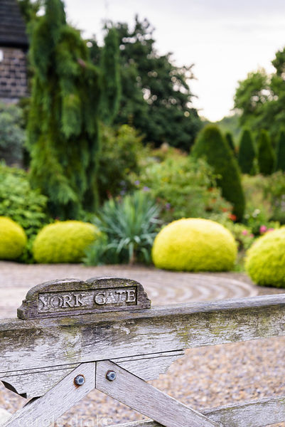 View over the gate into the driveway edged with clipped golden yew, yuccas and other trees and shrubs at York Gate Garden, Ad...
