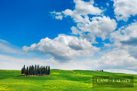 Tuscany landscape with cypresses - Europe, Italy, Tuscany, Siena, Val d'Orcia, San Quirico d'Orcia, Torrenieri - digital