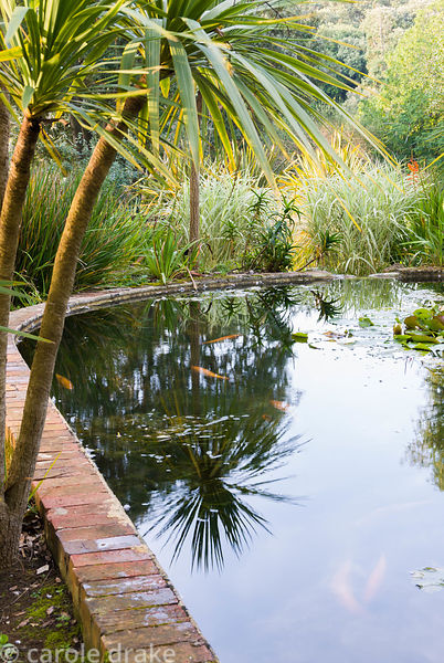 Victorian lily ponds, originally built in 1896 for irrigation purposes, with Cordyline australis 'Sundance'. Abbotsbury Subtr...