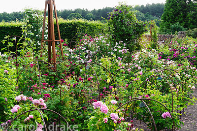 The rose garden, replanted in 2011. Felley Priory, Underwood, Notts, UK