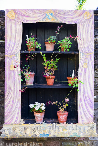 Auricula theatre displaying scented leaved pelargoniums at the Yeo Valley Organic Garden, Blagdon, Somerset