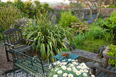 Seating area beside a pond in the end section of the garden, framed with standard marguerites, phormiums and pondside plantin...