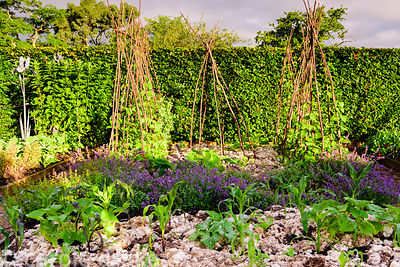 Vegetable beds planted with sweetcorn, courgettes, catmint and climbing beans, mulched with sheep's wool at The Yeo Valley Or...
