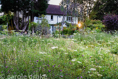 Meadow full of cow parsley and common knapweed at Five Oaks Cottage in July