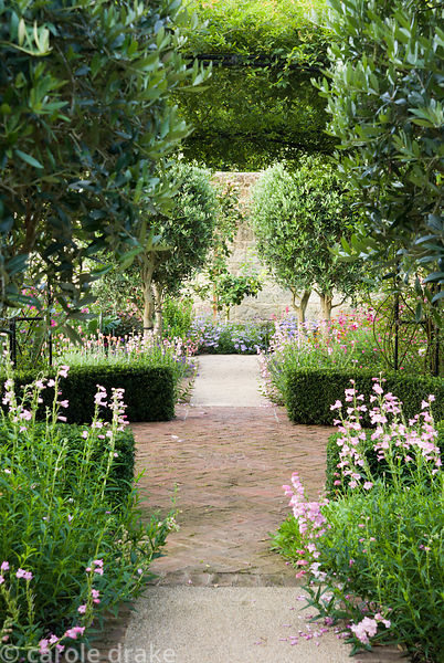 Standard olives frame a path running below the rose arch clad with Rosa banksiae, and underplanted with pink penstemons and s...