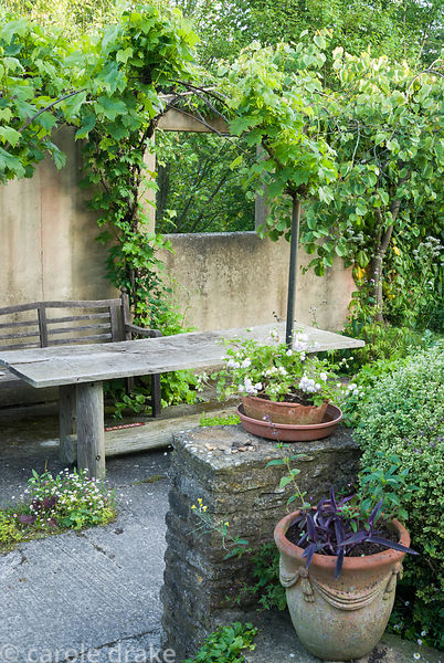 Covered seating area clothed with Vitis 'Brant'. Private garden, Dorset, UK