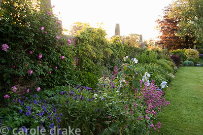 Long border with irises, hardy geraniums, Centurea montana, Centranthus ruber and roses. Whalton Manor Gardens, Whalton, Nort...