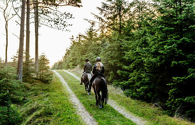 Danish women riding horses in Thy woods, Denmark 4