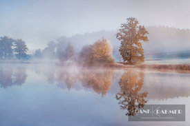 Moor lake in fog - Europe, Germany, Bavaria, Upper Bavaria, Weilheim-Schongau, Penzberg, Riederner Weiher - digital
