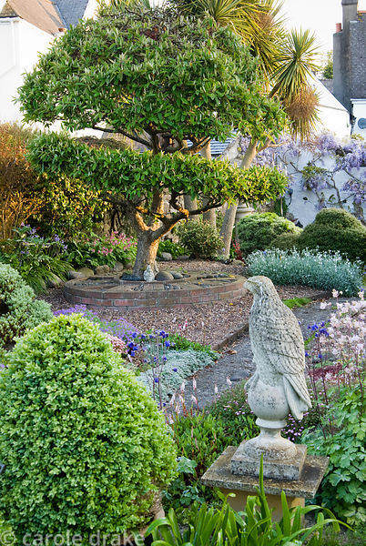Stone eagle surrounded by clipped box and aquilegia, with shaped cotoneaster tree beyond. 24 Bude Street, Appledore, Devon, UK
