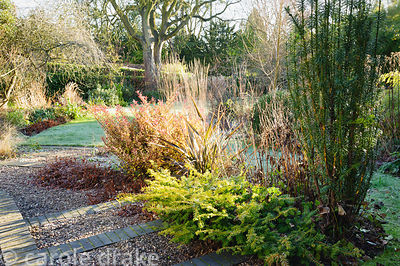 Border in the front garden with evergreen Pseudowintera colorata 'Marjorie Congreve', phormium and prostrate and fastigiate y...