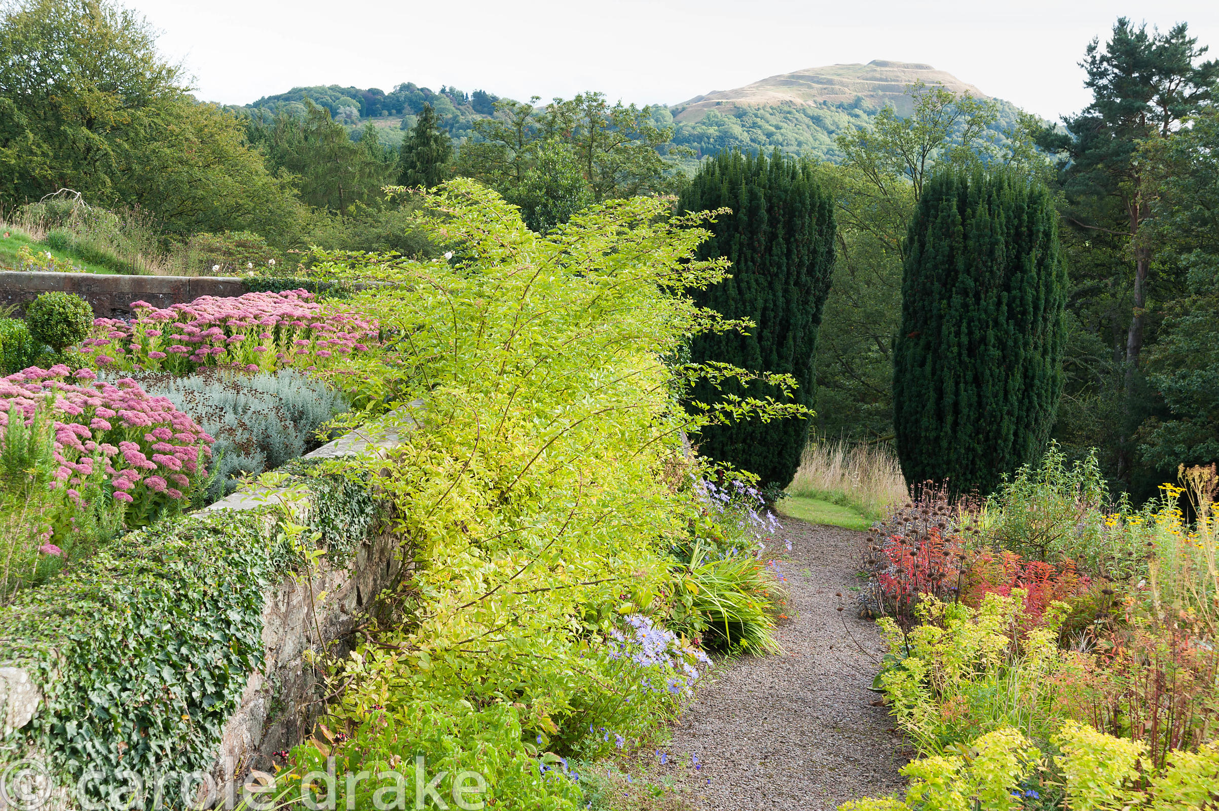 Path between terrace and border of late summer perennials including asters with euphorbias and phlomis, leads toward a pair o...