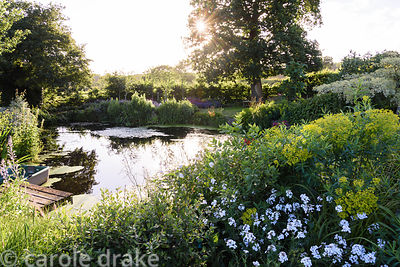 Farm pond surrounded by lush planting including Cornus controversa 'Variegata', euphorbias and honesty at  Malthouse Farm, Ha...