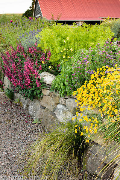 Planting in a raised bed includes grasses, phygelius, echiums and tanacetum at 2 Durnamuck, Little Loch Broom, Wester Ross in...