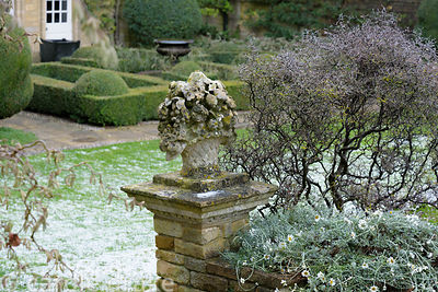 Corokia beside a stone cornucopia at Bourton House in January