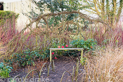 Curvaceous woven willow screen behind a bench in the winter garden at Ellicar Gardens, Notts